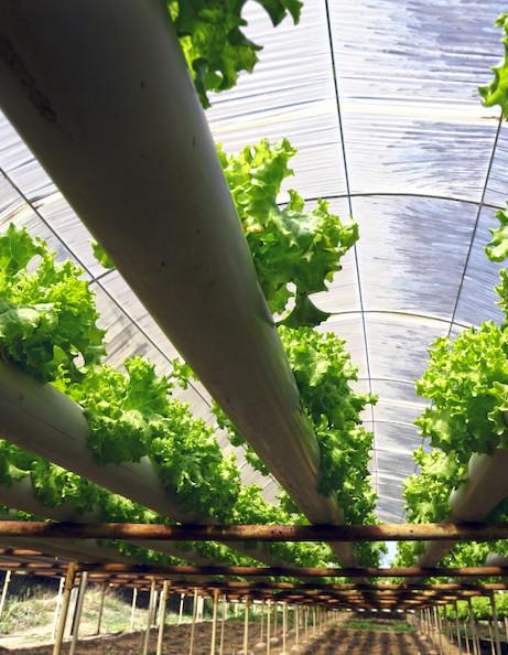 humans-garden-agricoltura-sostenibile-idroponica